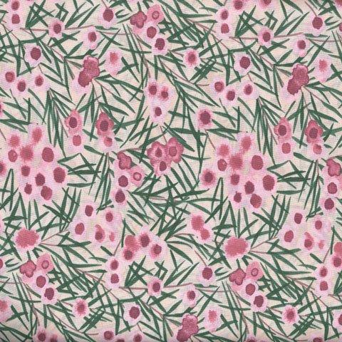 Wax-Flower-Pink